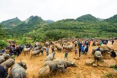 Büffel kann Cau-Markt Bac Ha Stockfotos