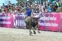 Büffel-Laufen Lizenzfreies Stockbild