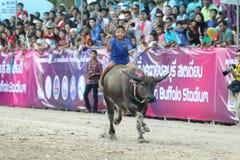 Büffel-Laufen Stockbild