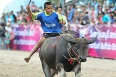 Büffel-Laufen Stockfotografie