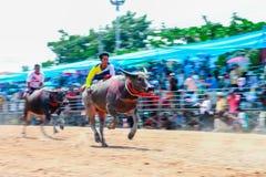 143. Büffel-laufendes Festival am 7. Oktober 2014 Stockfotografie