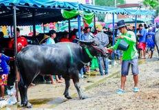 143. Büffel-laufendes Festival am 7. Oktober 2014 Lizenzfreies Stockfoto