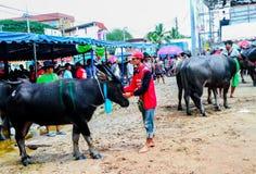 143. Büffel-laufendes Festival am 7. Oktober 2014 Stockbilder