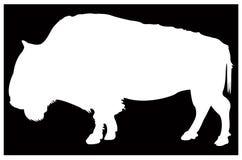 Büffel- oder Bisonschattenbild - großes Tier der wild lebenden Tiere lizenzfreie abbildung