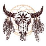Büffel-Schädel mit Federn und Dreamcatcher Stockfoto