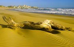 Büffel-Schacht - wilder seitlicher Strand lizenzfreie stockfotografie