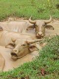 Büffelbad stockfotografie