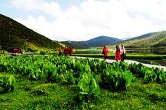Büffelbuttergras, weiße Wolken, Gebirgswald, Wiese, Shangri-La Landschaft Lizenzfreies Stockbild