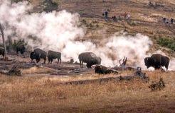Büffelherde und -touristen mit Kameras in Yellowstone Lizenzfreies Stockfoto