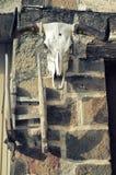 Büffelschädel auf altem Backsteinmauerhintergrund Stier-Weiß Scull Instagram-Weinlese-Filterblick Lizenzfreies Stockfoto