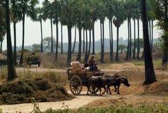 Büffelwarenkörbe geschleppt auf Myanmar-Gebiet Lizenzfreie Stockfotos