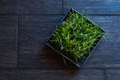 Bügeln Sie Topf mit grünem Gras auf einer dunklen Fliese Stockfotos