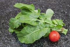 Bündel Arugula rukola mit Tomate Stockbild