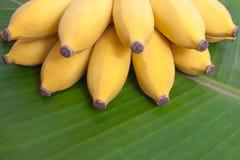 Bündel Bananen Stockbilder