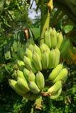 Bündel Bananen Lizenzfreies Stockbild
