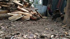 Bündel Bauholz am Dorf Henne und Huhn, die herum gehen stock footage