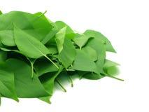 Bündel Blätter Stockfotos