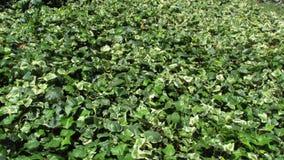 Bündel Blätter stockfoto