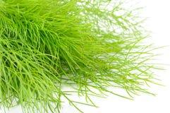 Bündel der frischen grünen Fenchel-Nahaufnahme Lizenzfreie Stockfotos