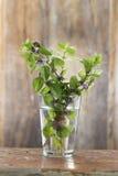 Bündel der frischen Minze in einem Glas Wasser Stockfotos