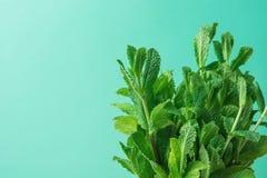Bündel der frischen organischen Minze auf Pastelltürkis-Hintergrund Minimalist redete Bild mit Kopien-Raum für Blog-Fahnen-Plakat Lizenzfreies Stockfoto