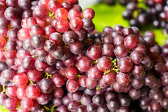 Bündel der frischen reifen roten Trauben, Hintergrund der roten Weinreben Lizenzfreies Stockfoto