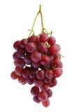Bündel der frischen roten Trauben Stockbild