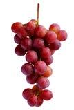 Bündel der frischen roten Trauben Stockfotografie