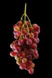 Bündel der frischen roten Trauben Lizenzfreies Stockfoto