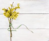 Bündel der gelben Pussyweide mit grünem Bogen auf weißem Holz Stockfoto