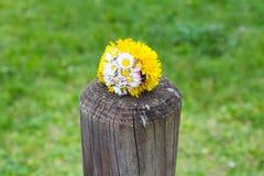 Bündel der Löwenzahnblume auf einem hölzernen Pfosten, der Frühling symbolisiert Lizenzfreies Stockbild