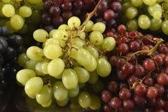 Bündel der reifen Trauben, Vielzahl von Grünem, von Braunem, Wein und Schwarzes, Hintergrund von Trauben Stockfotos