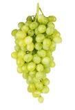 Bündel der reifen und saftigen grünen Traubennahaufnahme auf einem weißen backgro Stockfoto