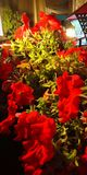 Bündel der Rot-grünen Blume lizenzfreie stockbilder