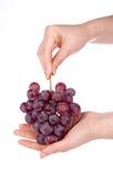 Bündel der roten Trauben in den Händen Stockbild