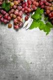 Bündel der roten Trauben herein mit Blättern Stockfoto