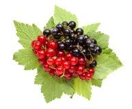 Bündel der roten und Schwarzen Johannisbeere auf Blättern Stockfoto