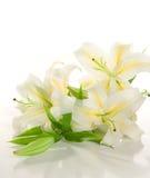Bündel der weißen Lilien ' Lizenzfreie Stockfotografie