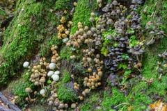 Bündel des herbstlichen Pilzes Stockfotografie