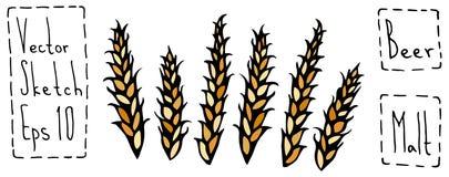 Bündel des Malz-Gekritzels Sketsh Reife Ohren des Malzes, Gerste, Weizen, Rye Bierkneipe-Vektor-Illustration Lizenzfreies Stockfoto