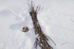 Bündel eines Reisigs auf einem Schnee Lizenzfreies Stockbild