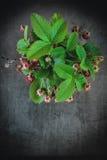 Bündel Erdbeeren Lizenzfreie Stockfotografie