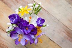 Bündel Frühlingsblumen Krokus und Schneeglöckchen auf der hölzernen Rückseite Stockfotos