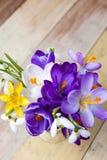 Bündel Frühlingsblumen Krokus und Schneeglöckchen auf der hölzernen Rückseite Stockfoto