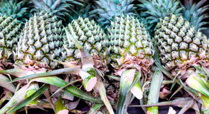 Bündel frische Ananas am Landwirtmarkt Lizenzfreies Stockfoto