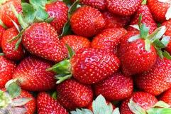 Bündel frische Erdbeeren Lizenzfreies Stockfoto