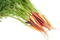 Bündel frische Karotten in drei verschiedenen Farben Lizenzfreie Stockfotografie
