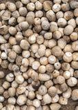 Bündel frische Pilze für Verkauf am Markt. Stockbild