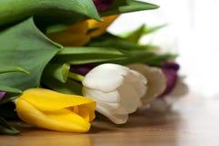 Bündel frische purpurrote, gelbe und weiße Tulpenblumen schließen oben Weichzeichnung und bokeh Stockfoto