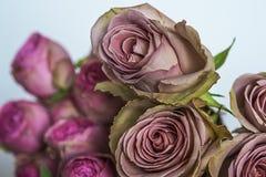 Bündel frische rosa Rosen schließen oben Stockfotos